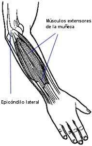 anatomia-w